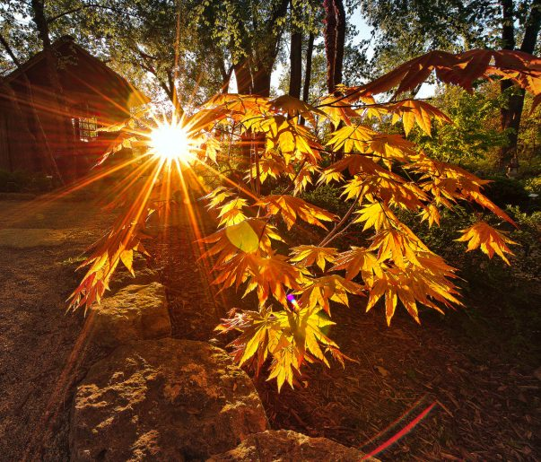 Sun Rays Thru the Leaves Orange Color Colorful Rich House Back Lit BackLit Sunrise Sunset Tree Trees Warm Tones Janesville Wisconsin Spring Summer Rock County