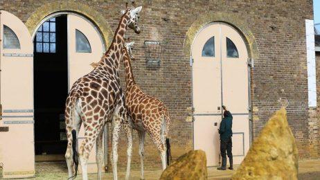 Зоологическата градина в Лондон: атракция за малки и големи