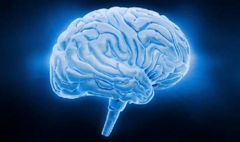 Повечето килограми водят до застаряване на мозъка