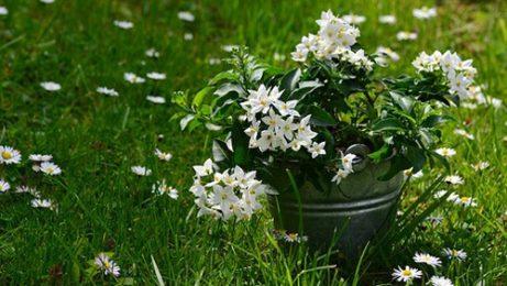 Растения, които носят положителна енергия в дома