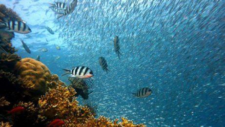 Какво ни казват неизследваните звуци на океана