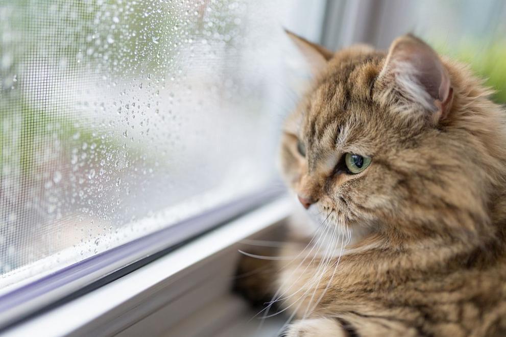За котките не е полезно да излизат навън