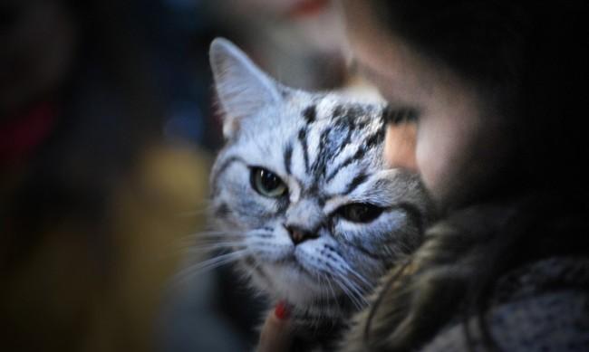 Пет признака, че котката ви обича