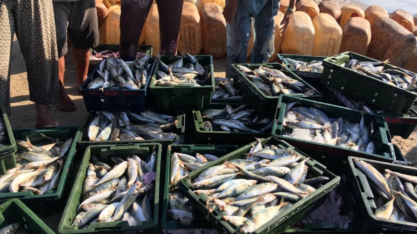 Великобритания може да разреши проблемите на шотландските рибари